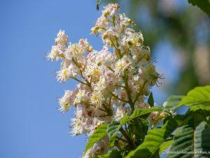 Klebebild weiße Blüte