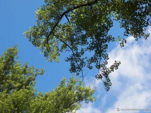 Deckenbild Baum