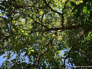 Deckenbild Blätterdach